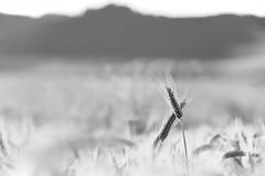 None other (Peter PeBe Bosko) Tags: blackandwhite monochrome outdoor black white blackwhite bw bandw stara lubovna slovakia slovensko nature priroda d610 28300 28300mm blackandwhitephotography