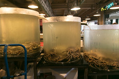 wa_seattle_pikeplace-12.jpg (BradPerkins) Tags: market washington crabs landmark pikeplacemarket publicmarket tourist urbanlandscape food seattle fishtanks
