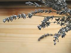 dry flowers (sunshine lydia) Tags: dry flower lavander vintage atmosphere focus micro ambient interior details home decoration homeasart