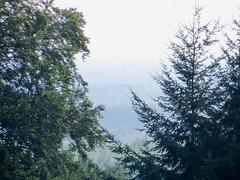 IMG_5251 (jaglazier) Tags: 2016 91416 bielefeld bielefeldzoo coniferoustrees conifers copyright2016jamesaglazier deciduoustrees germany hills september teutoburg teutoburgforest teutoburgerwald trees zoos mountains parks nordrheinwestfalen