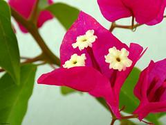 Petals and flowers (* Snowflakes *) Tags: fiore fiori giardino piante petali petalo