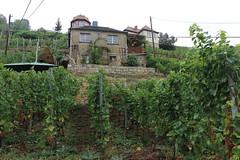 Wohnen im Weinberg (julia_HalleFotoFan) Tags: weinbau weinbaugebiet saaleunstrut weinberg trauben winzer strausenwirtschaft freyburg