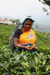 Tea picker in Nilgiri (Tea-Exclusive.de) Tags: nilgiri teapicker nilgiriteaestateteeteeanbaugebietteepflcker