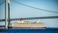 Under the Bridge (John Skelson) Tags: newyorkcity harbor nikon manhattan worldtradecenter statenisland cunard queenelizabeth oceanliner reallyrightstuff newyorkharbor nyharbor gitzotripod nikond600 sigma120400mmlens johnskelson verrizanonarrowsbridge stapletonstatenisland vzbridge nikcolorefexpro4