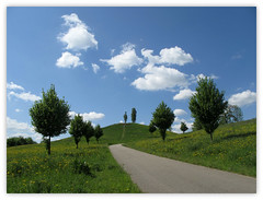Longing for spring (Batikart) Tags: road trees sky plants white flower green nature grass leaves yellow clouds canon germany way landscape geotagged deutschland foot leaf spring flora europa europe peace seasons hiking path hill natur pflanze may meadows wiese h