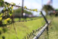 the fence (Arista_Imaging) Tags: life canon fence wire peace bokeh flag think hobby thoughts therapy choices barbwire choose wisely bokeholic