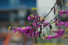 Spring Colors #1 (grzema) Tags: flower colors spring purple sony a380 kaleinar