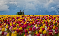 Spring Drama (Eric.Vogt) Tags: old flowers blue sky tractor storm color festival oregon spring blurry unitedstates tulips bokeh farm stormy tulip johndeere woodburn woodenshoetulipfarm