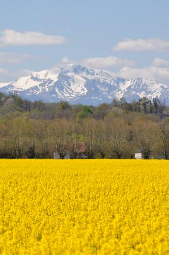 Le pic d'Anie (2504m), Béarn, Pyrénées atlantiques, Aquitaine, France.