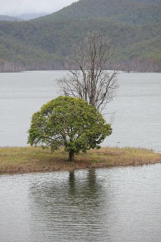 Last trees standing