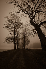 April Fog (Bangern) Tags: bw mist snow tree nature field silhouette norway fog night contrast forest dark nikon le april dirtroad sephia tones d800 14mm samyang gravelledroad