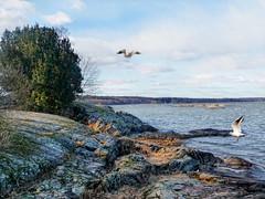 Rendezvous ? (Bessula) Tags: sky lake tree nature stone coast view gulls landcape photomix bessula rememberthatmomentlevel4 rememberthatmomentlevel1 rememberthatmomentlevel2 rememberthatmomentlevel3 creativephotocafe besteverdigitalphotography