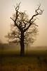 Nudie Tree (Trout Mask) Tags: winter mist tree fog meadows cossington uninspiringwastelandatfirstglance notgreatbutbetterthanspuffcake
