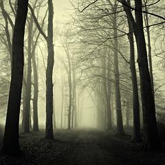 Fairytale Forest (frata60) Tags: autumn trees forest nikon herfst tokina glimmen d200 bos 1224mm f4 bospad flickraward quintusbos