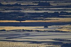 Tinit, here we come! | Greenland (jackwolfskin_com) Tags: schnee snow ice landscapes glacier greenland sledge schlitten landschaften grnland schlittenhunde sledgedogs