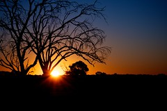 Last Glow of Day (2) (glacierdave) Tags: trees sunset silhouette queensland outback deadtrees longreach lastglow outbacksunset starlightslookout