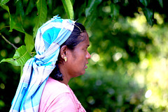 Tea Pickers in Sri Lanka (Sallyrango) Tags: asian women asia srilanka hillcountry teaplantation asianwomen teapicker ashburnhamteaestate