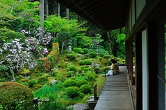 The season of fresh green, Kyoto Sanzen-in (yinlei) Tags: green japan spring kyoto   sanzenin