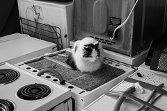 That certainly put the cat amongst the white goods... (DorsetScouser) Tags: blackandwhite bw home trash cat alley funny streetphotography dorset rest comfort recycling cooker alleycat bridport whitegoods westdorset throwawaysociety