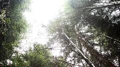IMG_2342 (Yehor Buivol (Ukraine)) Tags: wood nature germany deutschland wald schwarzwald