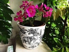 flower pots mammoth (john bonham2) Tags: pink flowers blue windows red roses summer orange plant flower green floral colors beauty rose yellow illustration garden painting square logo photography design miniature blackwhite origami colorful paint pretty acrylic hand purple orchids graphic image time random sweet drawing unique magic watching smooth fuchsia experiment free sunny stamp pot hibiscus clay mammoth printing stuff pixel vase colored plates everything geranium maiden untitled potted rhythm holder watering lavendar decorated