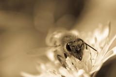 Kiss (.el Ryan.) Tags: bw naturaleza argentina bn mendoza popular raras insecto digitalcameraclub chacrasdecoria wonderfulworldofflowers