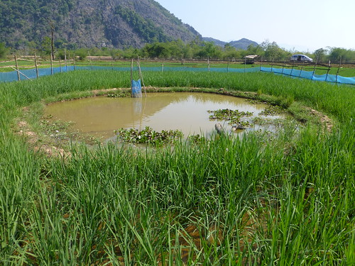 A rice and fish farm in Laos. Photo by Jharendu Pant, 2013