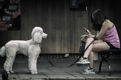You never talk to me anymore... (8230This&That) Tags: nyc newyorkcity dog ny phone centralpark manhattan streetscene poodle walkthedog mobiledevice