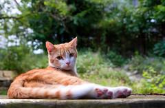 (Vitatrix) Tags: katze jungkater out cat