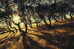 Buckeyes (Davor Desancic) Tags: morganterritoryregionalpreserve morgan territory regional preserve california ebparksok livermore