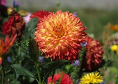 IMG_3797 (germancute) Tags: nature outdoor wildflower flower blume park beet wiese garden garten