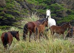 The White Horse (Alan1954) Tags: horse newzealand whitehorse holiday 2014 nature platinumpeaceaward