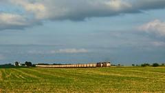 The Escorts (Theresa*) Tags: malta illinois train unionpacific farm field birds green sunlight coal empty engine clouds sky nikond7100
