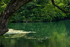 Reflection (tez-guitar) Tags: pond water lake reflection reflections green summer wood forest tree trees tohoku aomori