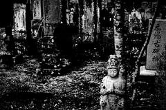 Un petit vhicule (www.danbouteiller.com) Tags: japan japon japonia japanese japonais nasu tochigi park parc cemetery cimetire tombs grave graves tomb shinto shintoism buddhist buddhism tree monochrome mono monochromatic black white noir blanc bw nb blackandwhite blackwhite blacknwhite noiretblanc canon canon5d eos 5dmk2 5d 50mm 50mm14 5d2 5dm2