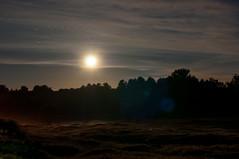 Dark Moonlight (Lorenzo Sedita) Tags: etna moon moonlight light natural luna luce di naturale boschi trees wood piano vetore mount vulcano volcanology nicolosi belpasso osservatorio serra la nave nikon 50mm 14 ngc
