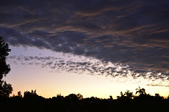 Bundaberg Skys (Images by Jeff - from the sea) Tags: nikon d7200 dusk twilight trees pink palmtrees pinksunset clouds tamron blackcloud bluesky bundaberg tamronsp2470mmf28divcusd storm sunset nikonclubit 500v20f
