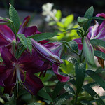 oneplant, ouryard, jdy199 XX201607178986.jpg thumbnail