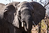 DSC09323 (Wikus Olie4) Tags: krugerpark mpumalanga southafrica