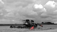the incredible hulk.... (BillsExplorations) Tags: hulk fire burned accident farmfire farming farmmachinery combine red dangerous field soybeans agriculture selectivecolor blackandwhite illinois harvest grain hss sliderssunday