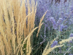 September 16, 2016 - Beautiful grasses and plants. (LE Worley)