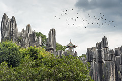 Stone Forest (Ragavendran / Rags) Tags: ragavendran china kunming forest birds fly clouds trees rocks stones stoneforest heritage site view viewpoint touristspot tourism nature manmade