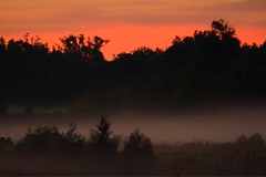 Created with Photo Editor- http://axiem.net/editor In the Morning light with the mist (CCphotoworks) Tags: nature outdoors scenics landscapes silhouettes sumrise morninglight mist