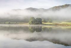 Mist in the Trees (loftylion9) Tags: grasmere lakedistrict sunrise mist sunset lonetree tilberthwaite castleriggstonecircle langdalepikes