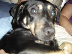 Connie's Birthday 2011 (5).JPG (wildrosetn39) Tags: wild dead real living domestic creatures imaginary elementsorganizer