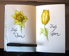 Mutterblumen (Flaf) Tags: flower colour water pencil drawing blumen tulip type florian ostern schrift eater tulpe narzisse osterglocke paques afflerbach