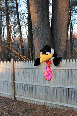 93/365 Yet another penguin (Scattereee) Tags: trees animal yard forest fence penguin woods funny fake stuffedanimal necktie