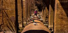 Duck chillin on the pipeline (scottmillerinva) Tags: heron river downtown richmond va pipeline rva jamesriver shockoebottom pipelinetrail