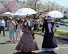 Cherry Blossom Promenade