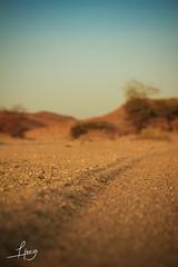 Road Trails (Hamza Filali) Tags: road hot sahara photography algeria sand desert graphic designer traces trails constantine algerie hamza freelance filali tamnrasset